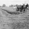 Parchman #18: An inmate utilizes mule-drawn equipment on Parchman Farm circa 1930.