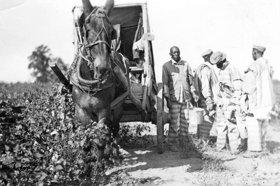Parchman #20: Inmates get water from a horse drawn cart on Parchman Farm circa 1930.