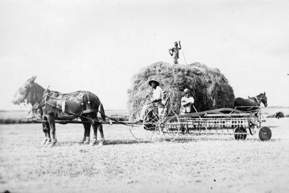 Hay Wagon #1: Inmates pause for a photo while gathering hay on Parchman Farm in the 1930s.